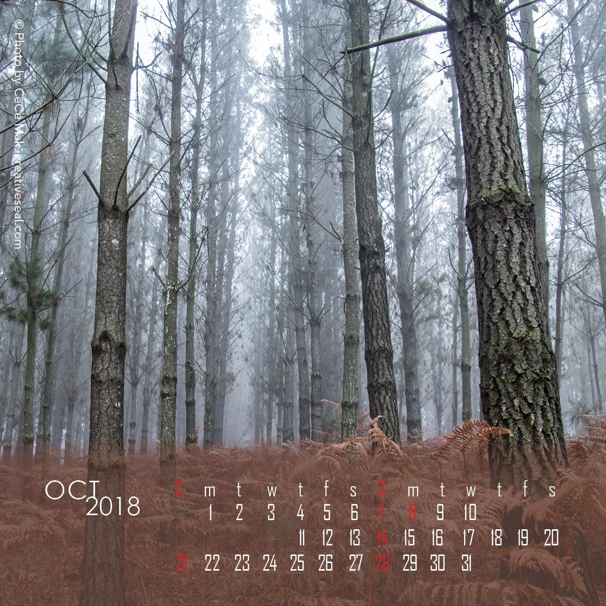 4x4-woods10