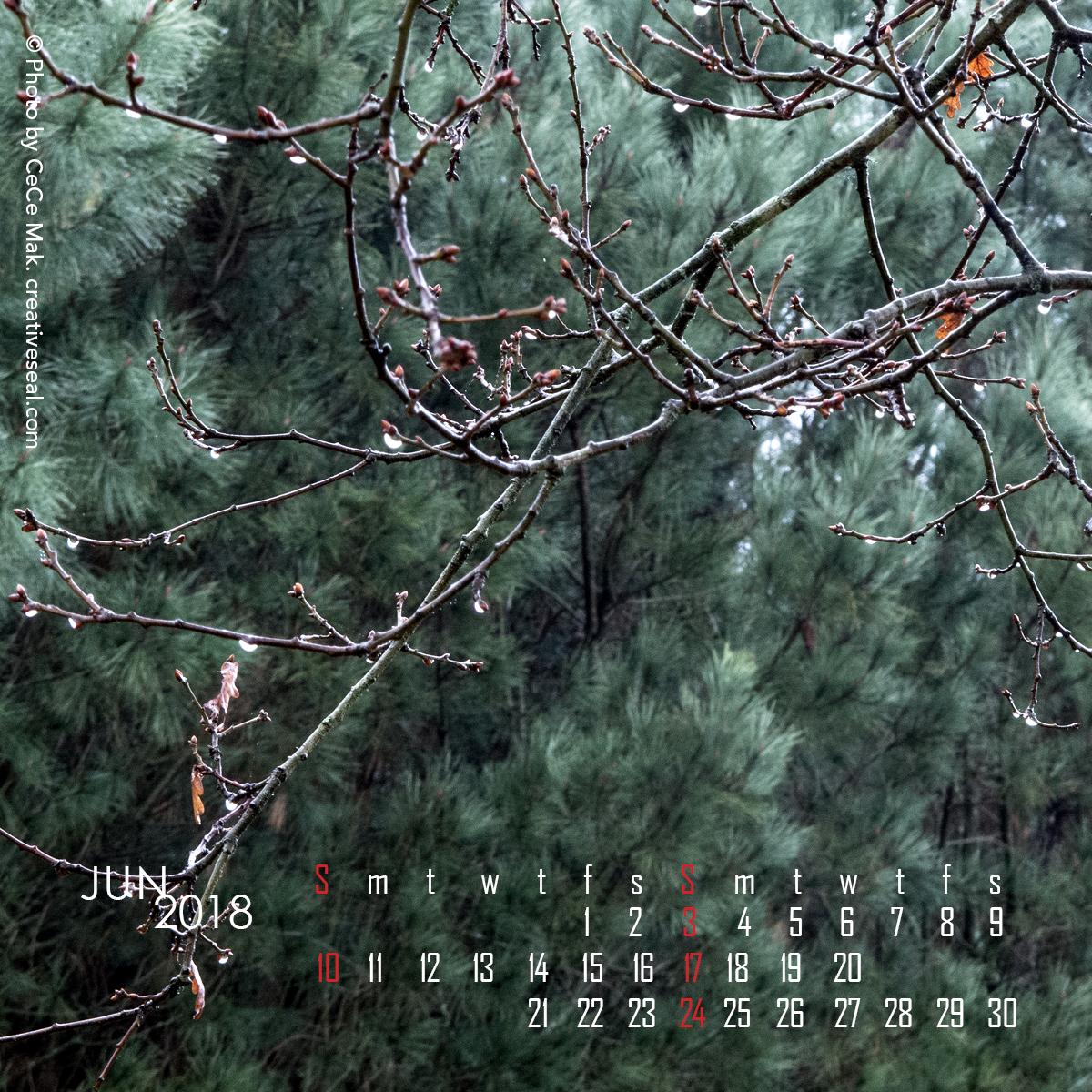 4x4-woods6