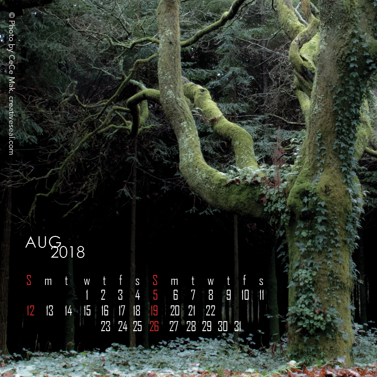 4x4-woods8